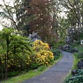 The Rhododendron Garden in Hendricks Park.- Hendricks Park