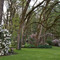 There is a grassy area at the top of the Rhododendron Garden.- Hendricks Park