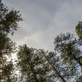 Towering ponderosa pines throughout Cold Springs Campground.- Cold Springs Campground