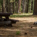 Typical campsite in Cold Springs Campground.- Cold Springs Campground