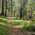 Trail to the head of the springs.- Cold Springs Campground