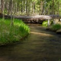 Cold Springs Creek in Cold Springs Campground.- Cold Springs Campground