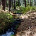 Cold Springs Creek runs through Cold Springs Campground.- Cold Springs Campground