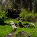 Cold Springs Campground.- Cold Springs Campground