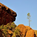 Lonely tree in Pinnacles National Park.- Moses Springs Trail