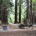 Gualala Point Campground.- Gualala Point Regional Park