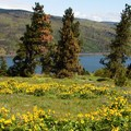 Plateau views are filled with wildflowers in the spring.- Mosier Creek Falls + Plateau Trail