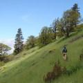 Trail up the plateau.- Mosier Creek Falls + Plateau Trail