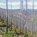 The Biscuit Fire burned nearly 500,000 acres in 2002.- Chetco River Hike via Babyfoot Lake Trailhead