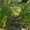 Take a left onto the Halloween Trail.- Novato Hill Climb