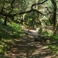 The trail alternates between woods and exposed path.- Novato Hill Climb