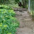 Wildwood Hills Park.- Westwood Hills Park