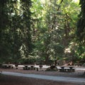 Picnic area in Armstrong Redwoods State Natural Reserve.- Armstrong Redwoods State Natural Reserve