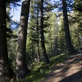 The trail climbs through an open and shaded Douglas fir forest.- Alpine + Sawtooth Lakes, Iron Creek Drainage