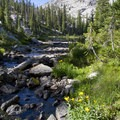 Pretty flowers decorate the small alpine creeks that tumble down the basins.- Alpine Creek Canyon