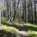 Alpine Canyon Trail winding through lodgepole pines.- Alpine Creek Canyon