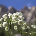 Wildflowers in the few open meadows are a pleasant addition to the hike.- Redfish Lake Canyon