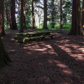 Picnic tables in a group of cedars.- Birch Bay State Park Campground