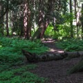A trail in the south loop.- Birch Bay State Park Campground