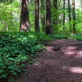 The trail includes several interpretive signs.- Terrell Marsh Trail