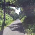 Lush vegetation along the Springwater Corridor.- Springwater Corridor