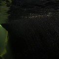 Beneath the surface in the Big Sur River Gorge.- Big Sur River Gorge