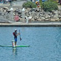 Stand-up paddleboarding is common in the harbor.- Seabright Beach