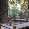 Many of the park's nature trails and paths are ADA accessible.- Pfeiffer Big Sur State Park