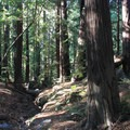 The campground provides access to redwoods and hiking trails.- Pfeiffer Big Sur State Park Campground