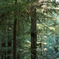 Armstrong Redwoods State Natural Reserve.- Armstrong Redwoods State Natural Reserve