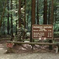 Pioneer Trail in Armstrong Redwoods State Natural Reserve.- Armstrong Redwoods State Natural Reserve