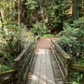 Pioneer Trail through Armstrong Redwoods State Natural Reserve.- Armstrong Redwoods State Natural Reserve