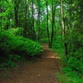 The trail to the Ridgetop Overlook.- Tualatin River National Wildlife Refuge