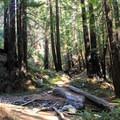 Limekiln Falls Trail. - Limekiln Falls