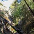 Limekiln Falls Trail.- Limekiln Falls