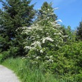 The Loop Trail travels through mixed forests, shrub lands, and meadows.- Discovery Park + Fort Lawton Historic Area