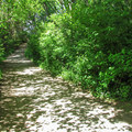 Heading down the South Beach Trail.- Discovery Park + Fort Lawton Historic Area