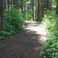 One of the short trails to the restooms.- Bay View State Park Campground