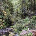 Little River.- Fern Canyon Trail