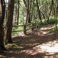 The West Rim Loop Trail.- Camano Island State Park Loop Trails