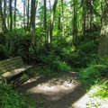 A bench on the Howard Adams Loop Trail.- Camano Island State Park Loop Trails