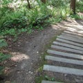 The Canyon Trail is the steepest section on the loop.- Camano Island State Park Loop Trails