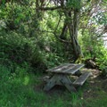 The Cascadia Marine Trail campsite (for wind and human powerd watercraft only).- Camano Island State Park