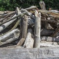A driftwood shelter on the south beach.- Camano Island State Park
