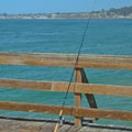 Fishing is permitted off of the wharf.- Seacliff State Beach