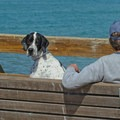 Seacliff is a dog friendly beach.- Seacliff State Beach