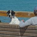Seacliff is a dog friendly beach.- Seacliff State Beach