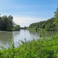 The Nooksack River from a short spur trail.- River Dike Trail