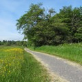 The Tennant Lake cut-off trail from the River Dike Trail junction.- River Dike Trail