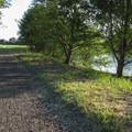 The Nooksack River alongside the trail.- River Dike Trail